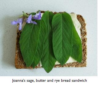 sage sandwiches