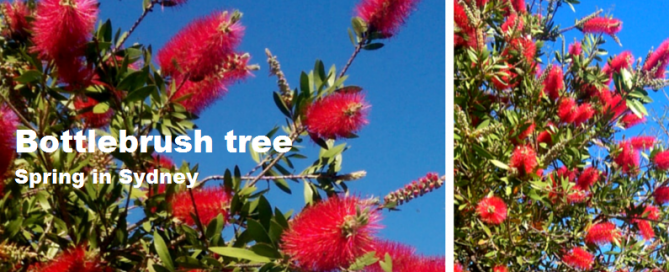Bottle brush remedy